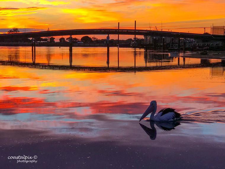 Swan Bay - 2019  Calendar Pic - 07.28.08