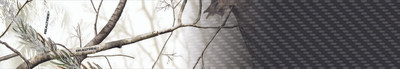 Realtree-Ed Wycuff-1