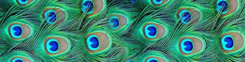 Stabilizer Wrap-Peacock