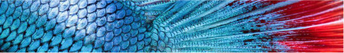 Arrow Wraps-Fish Scales-2