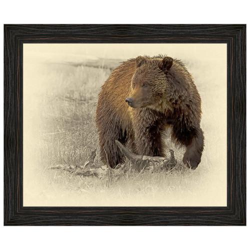 Grizzly Bear Framed Canvas