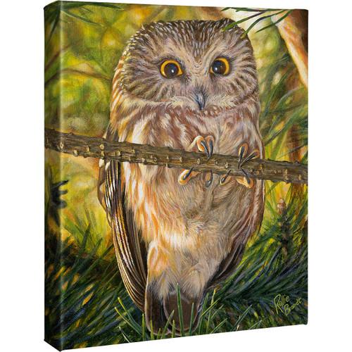 Little Owl Canvas Art