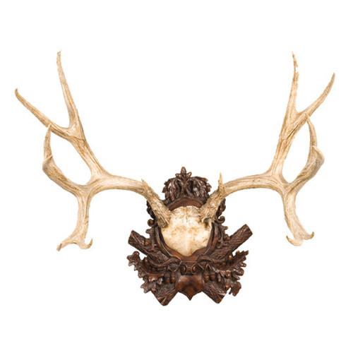 Mule Deer Antlers Plaque