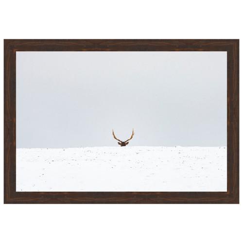 Peeking Elk Framed Canvas