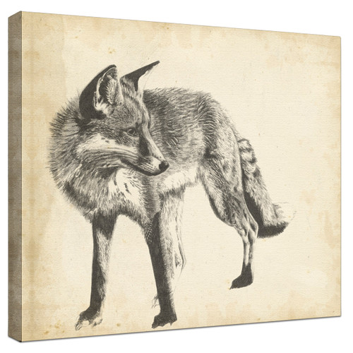 Wildlife Snapshot Fox Gallery Wrapped Canvas