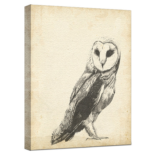 Wildlife Snapshot Owl Gallery Wrapped Canvas