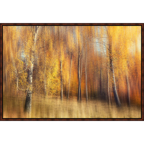 Birch Forest in Fall Framed Canvas
