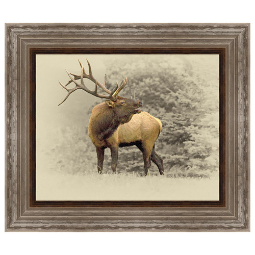 Bugling Bull Elk Framed Canvas