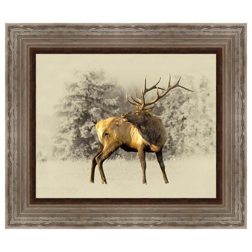 Bull Elk Framed Canvas