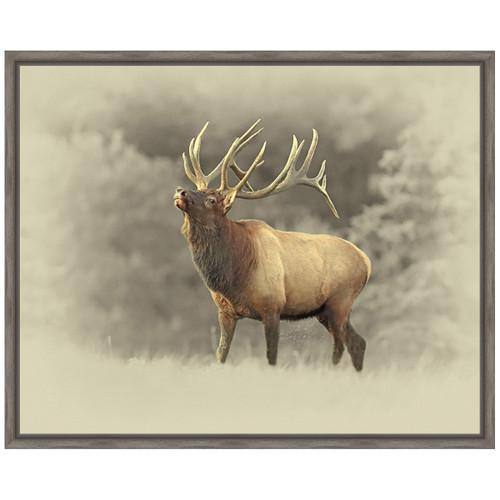 Bull Elk II Framed Canvas