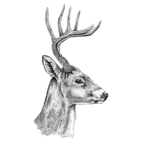 Deer Profile Canvas Art