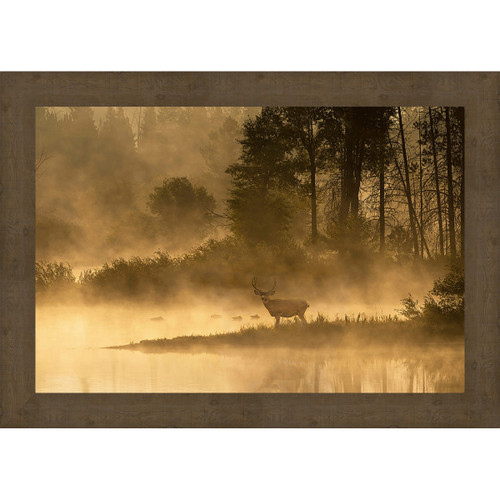 Foggy Morning Forest Framed Canvas