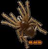 Gan Craft BIG SPIDER MICRO NEW