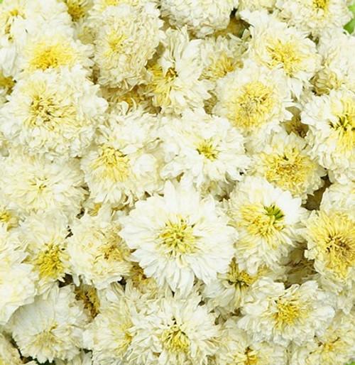 Organic Chrysanthemum Flowers - White