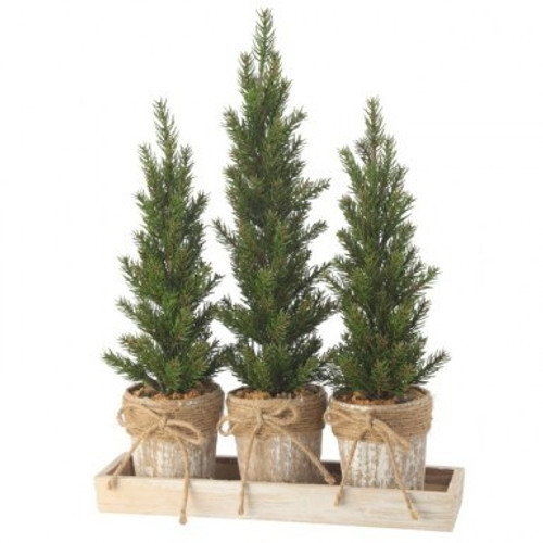 Triple Potted Pine Seedling Tray