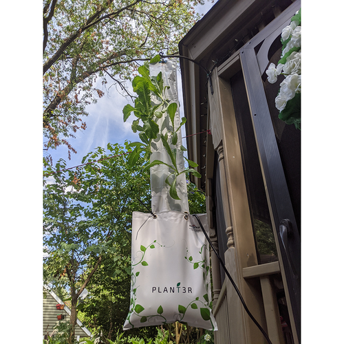 Hanging Plant3r with lettuce (hanger not included)