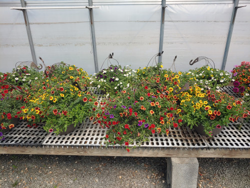 "11"" Hanging Baskets - Loudounberry"