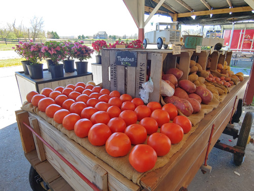Tomatoes - Loudounberry