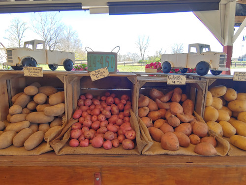 Red Potatoes - Loudounberry