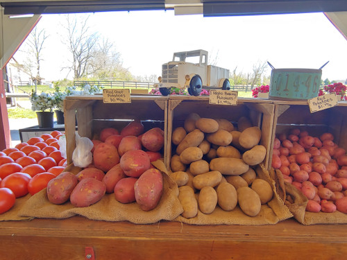 Red Chef Potatoes - Loudounberry