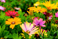 Birth Flowers and Their Meanings