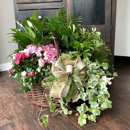 Our European Garden Basket features the seasons freshest plants with a European flair and a matching bow.