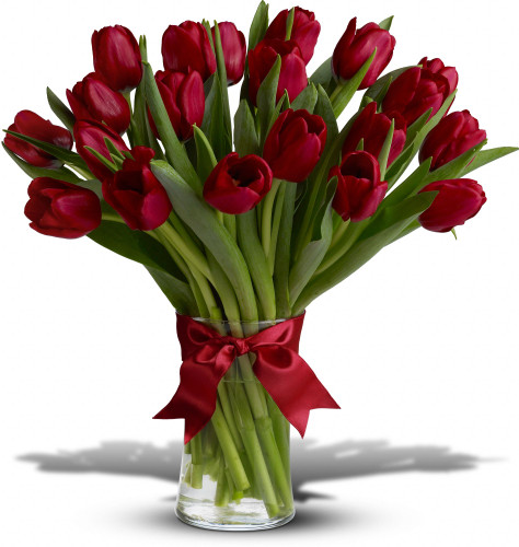 Radiantly Red Tulips (20)