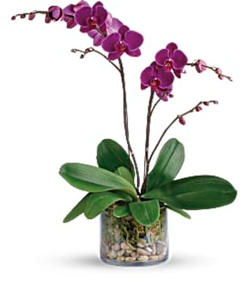 Orchid in clear glass