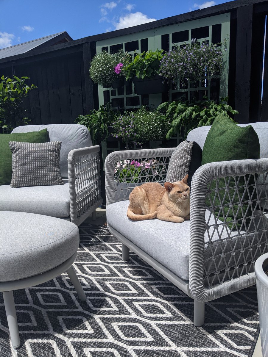 Club outdoor lounge chairs in Situ in Auckland