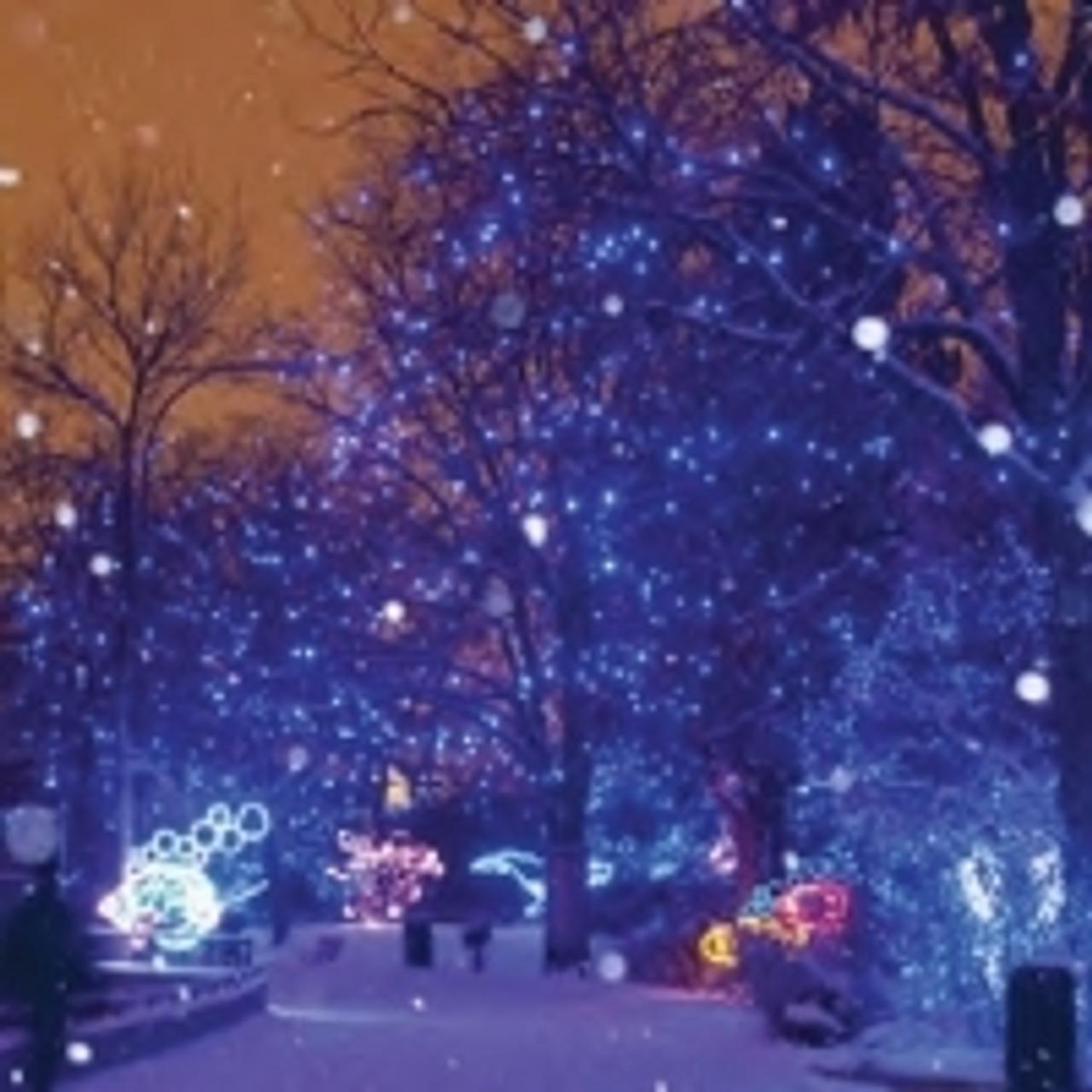LED Christmas Lights - String Lighting