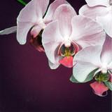 Exquisite Flower