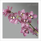 Get Well Soon Orchids Greeting Card - Icon Art