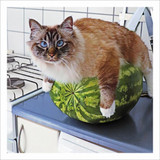 Melon Cat Greeting Card - Icon Art