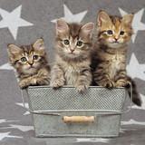 Tiny Tabbies Cat Greeting Card - Icon Art