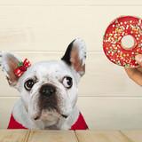 Temptation Dog Greeting Card - Icon Art