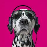 Snoop Dog Icon Art Greeting Card - Icon Art