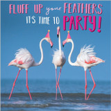 Fluff Up your Feathers Greeting Card - Abacus