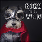 Born to Be Wild Funny Greeting Card - Abacus