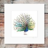 Peacock | Mounted Print | Georgie Woolridge
