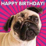 Birthday Pug Lenticular 3D Greeting Card - Mint Publishing