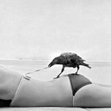 Cheeky Bird  | Greeting Card | Icon Art