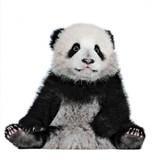 Albert the Panda Greeting Card - Icon Art