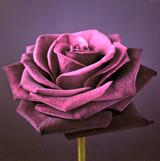 Floral Velvet Greeting Card | Icon Art