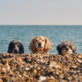 3 Beach Dogs | Greeting Card | Ohh Deer
