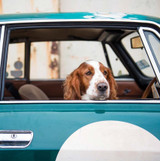 Dog in the Car | Greeting Card | Ohh Deer