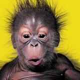 Alfie the Orangutan Comedy Greeting Card - Icon Art