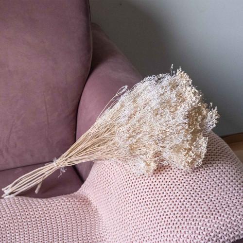 Broom Bloom