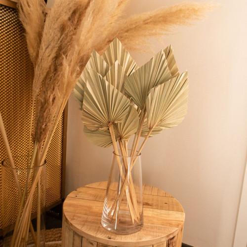 Palmes spear natures séchées