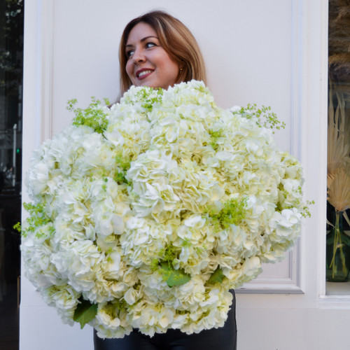 Bouquet géant d'hortensias blancs