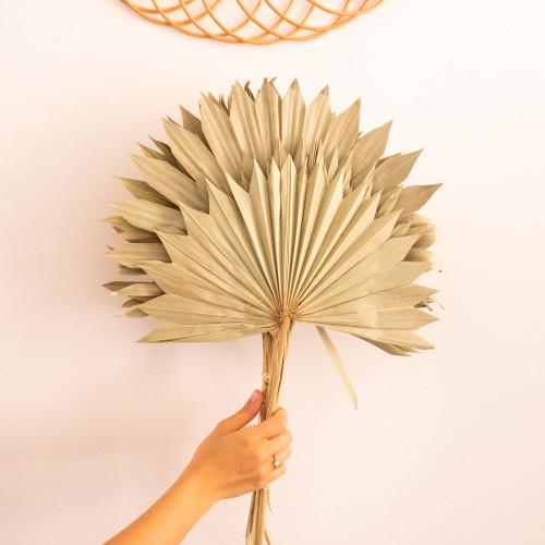 feuilles de palmes éventail séchées
